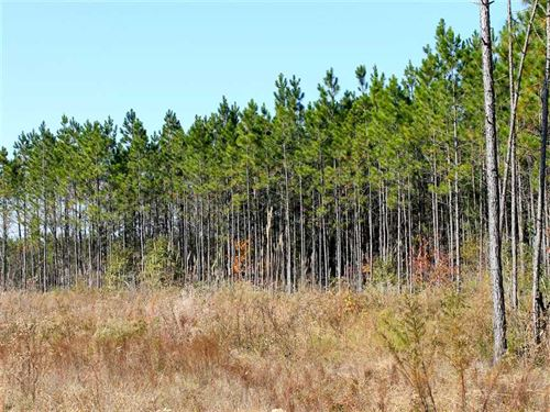 150 Acres For Sale in Wilcox Count : Abbeville : Wilcox County : Georgia