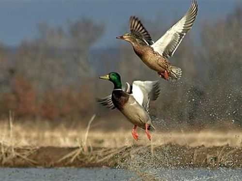 177 Acre Waterfowl Farm For Sale : Quapaw : Ottawa County : Oklahoma