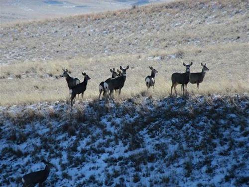 Cohagen Farm : Cohagen : Garfield County : Montana