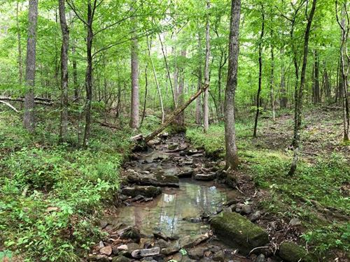 420 Acres of Timberland Near Tuscu : Tuscumbia : Colbert County : Alabama