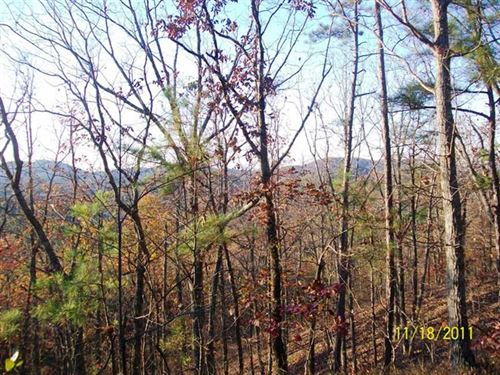 Hickory Hollow Mature Pine And Har : Ashland : Clay County : Alabama