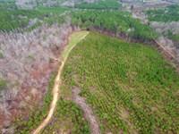 Fariview Property : Beaverton : Lamar County : Alabama