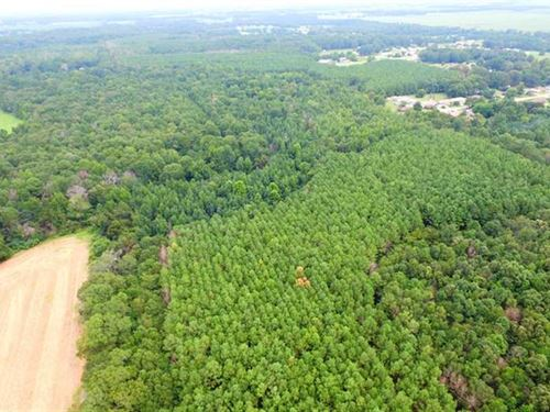 130 Acres of Highly Productive Soi : Leighton : Colbert County : Alabama