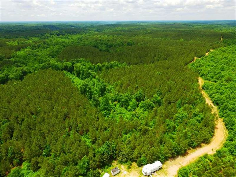 1,660 Acres Near Nashville, Tennes : Linden : Perry County : Tennessee