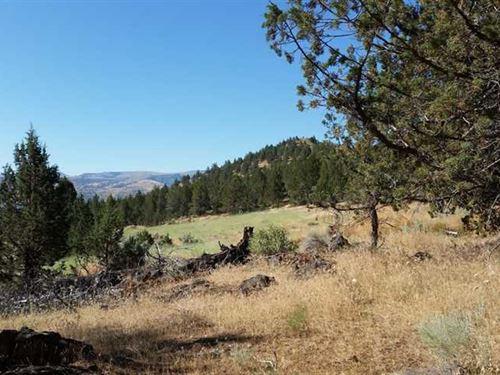 260 Acre Hunting Retreat on Starva : Spray : Wheeler County : Oregon