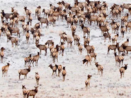 Colorado Elk Hunting Property in : Hayden : Routt County : Colorado