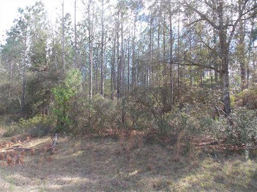 Vacant NE Condurango Lane Lee, FL : Lee : Madison County : Florida