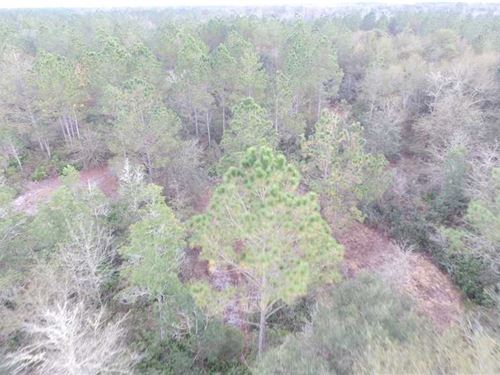 Hunting Tract on SW Henry Road : Madison : Florida