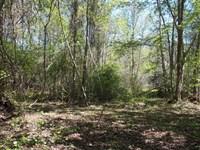35.79 Acres on SW Moseley Hall Road : Madison : Madison County : Florida