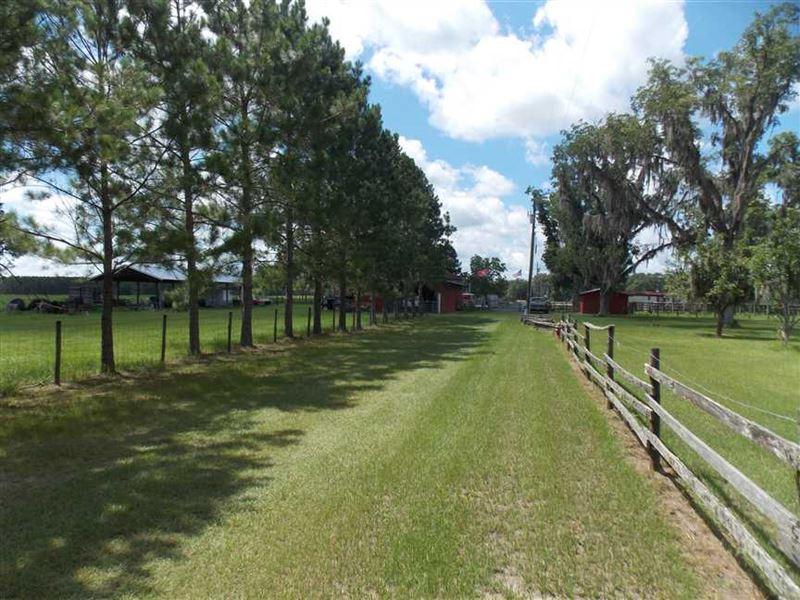 Turn Key Cattle Farm : Madison : Madison County : Florida