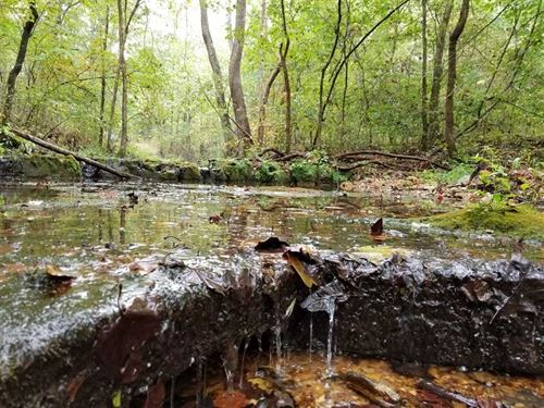190 Acre Recreational Property Wit : Zanoni : Ozark County : Missouri
