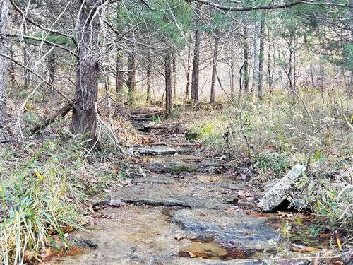 40 Wooded Acres With Paved Road Fr : Ava : Douglas County : Missouri