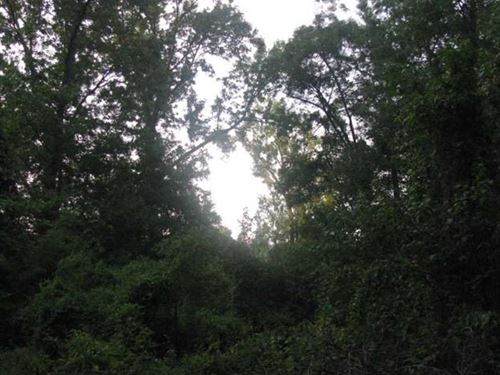 20 Acres of Floodable Timber Borde : Beebe : White County : Arkansas