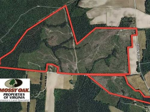 178 Acres of Prime Hunting And Tim : Disputanta : Sussex County : Virginia
