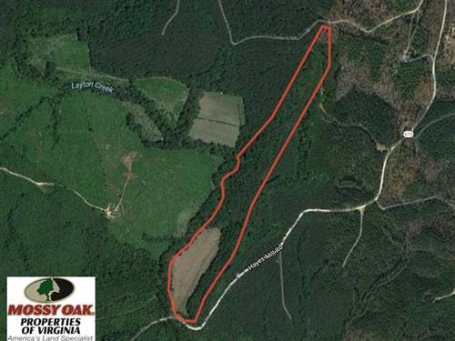 Reduced, 30 Acres of Hunting Land : Boydton : Mecklenburg County : Virginia