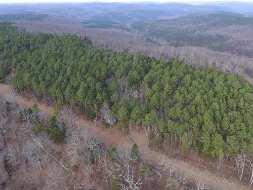 Back Woods 40 : Lamar : Johnson County : Arkansas