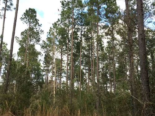 Bear Head Tract, Beauregard Parish : Singer : Beauregard Parish : Louisiana