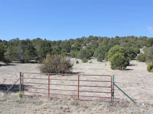 46.5 Acres Neighboring Forest And : Capitan : Lincoln County : New Mexico