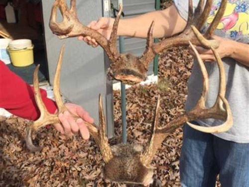 Hunters Paradise With Mature Timbe : Sulphur Rock : Sharp County : Arkansas