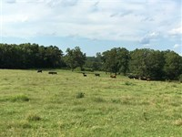 Cattle Farm With Hay Field And Mat : Cave City : Sharp County : Arkansas