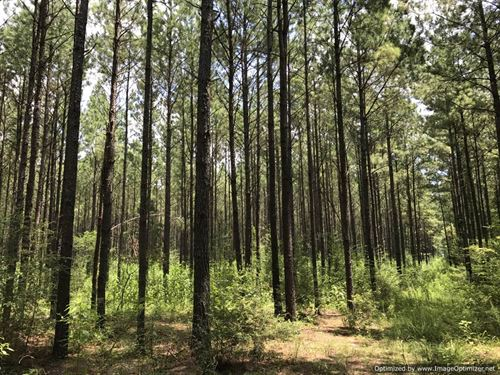 Hunting & Timber : Taylorsville : Smith County : Mississippi