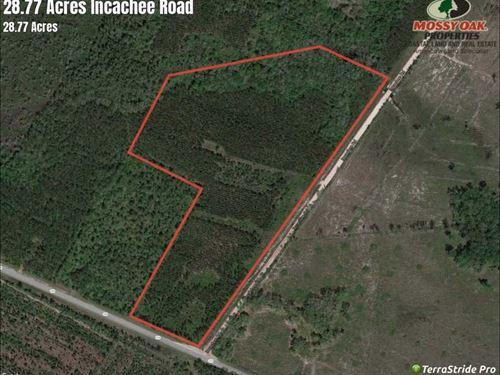 Land For Sale in Camden County, GA : White Oak : Camden County : Georgia