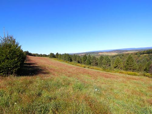 41 +/- Acre Tract Of Land : Stillwater : Columbia County : Pennsylvania