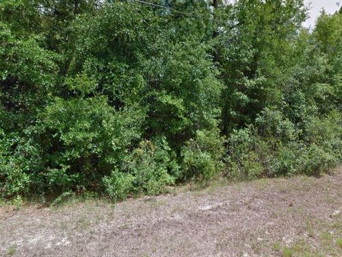 Citrus County, Fl $24,500 Neg : Citrus Springs : Citrus County : Florida