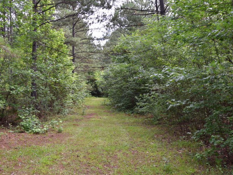 Pretty Old Family Timber Property : Monticello : Jasper County : Georgia