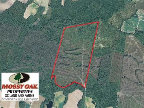 169 Acres of Hunting Land For Sale : Green Sea : Horry County : South Carolina