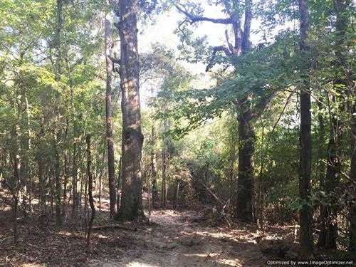 A Rare Find, Great Hunting on th : Sallis : Attala County : Mississippi