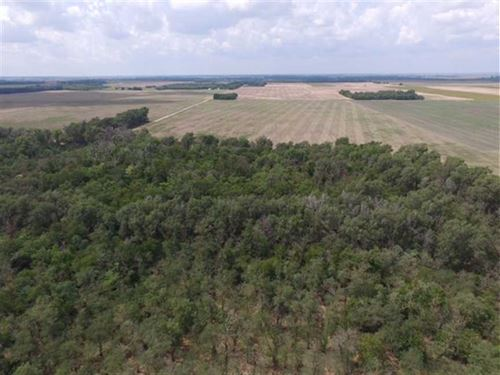 160 Ac of Tillable And Hunting : Saint John : Stafford County : Kansas