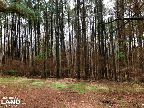 Wheeler Road 20 Acres Lot : Hernando : Desoto County : Mississippi