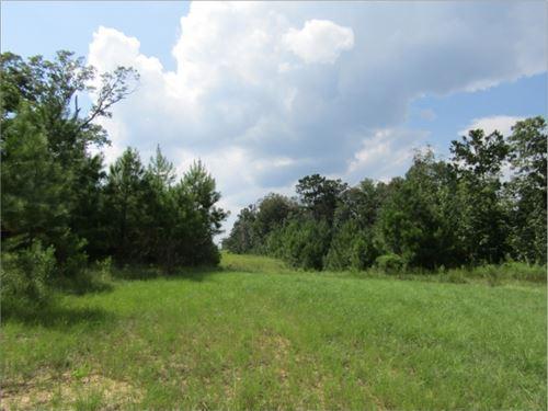 69 Acres In Jefferson Davis County : Prentiss : Jefferson Davis County : Mississippi