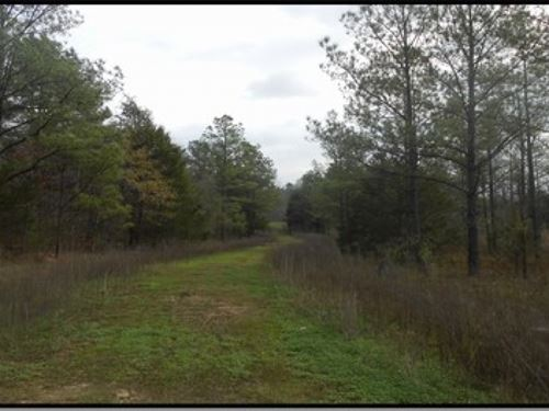 50 Acres In Rankin County : Pearl : Rankin County : Mississippi