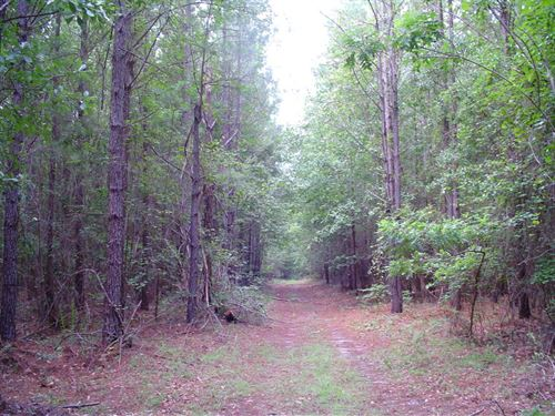 Thompson Paradise 1 Tract : Walterboro : Colleton County : South Carolina