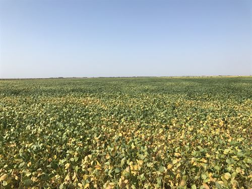 Spink County, Sd Farm Land Auction : Ashton : Spink County : South Dakota