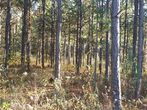 Timber, Hunting Tract W/ Large Pond : Morgan : Calhoun County : Georgia
