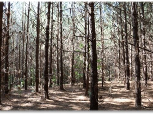 13.7 Acres In Yazoo County : Little Yazoo : Yazoo County : Mississippi