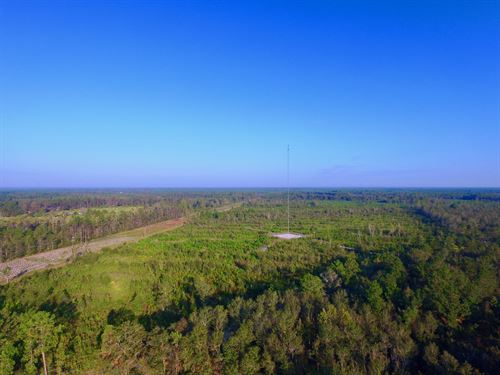 60 Acre Investment Tract : Ludowici : Long County : Georgia