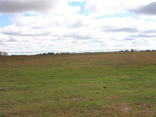 Holt County Irrigated Pasture : O'neill : Holt County : Nebraska