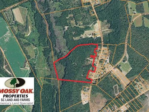 Reduced, 45 Acres of Hunting Land : Bishopville : Lee County : South Carolina