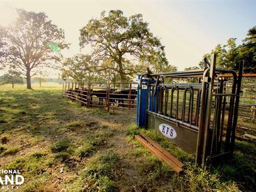 Turkey Creek Cattle & Country Livin : Warsaw : Benton County : Missouri