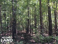 Mill Creek Hunting & Timber Tract : Fayette : Fayette County : Alabama