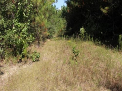 80 Acres In Greene County, Ms : Leakesville : Greene County : Mississippi