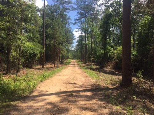 Timber Land, Hunting Land For Sale : McComb : Pike County : Mississippi