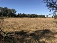 Open Land & Timber : Elko : Houston County : Georgia