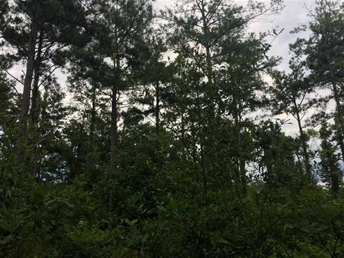 Reduced, 63 Acres, Pine Timber : Helena-West Helena : Phillips County : Arkansas