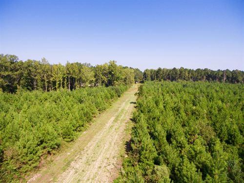 60 Acre Timber Hunting Tract, Elm : Elm Grove : Bossier Parish : Louisiana