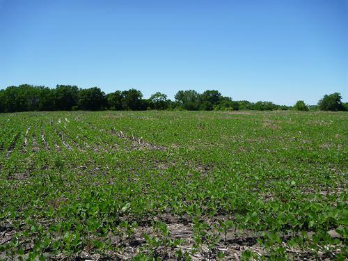Little Nemaha River Bend : Syracuse : Otoe County : Nebraska